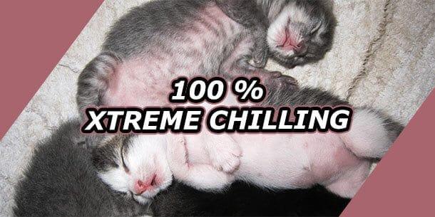 Mehr Muße - 100 Prozent Xtreme Chilling (Bild: Miriam Dürksen)